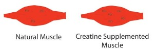 The Science Behind The Supplement