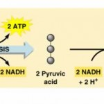 How is Lactic Acid Produced?