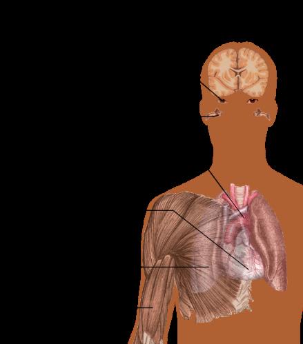 Cocaine Heart Damage • MyHeart