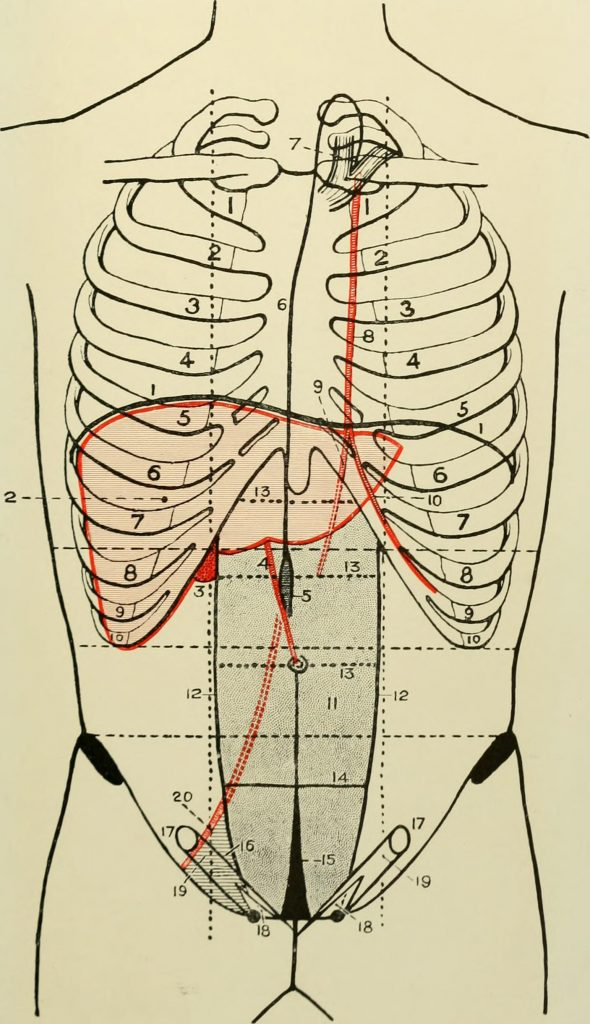 The Left Internal Mammary Artery (LIMA) is depicted here and is labelled #8.