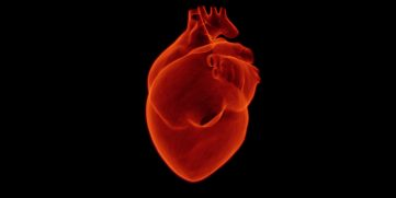 HEART FUNCTION INCLUDING EJECTION FRACTION ( EF )